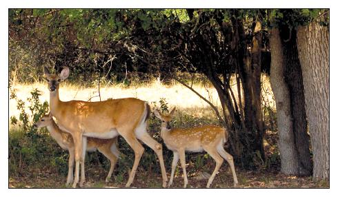 23-deer